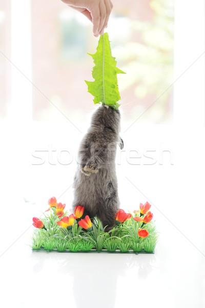Bebek tavşan çim yalıtılmış bo çiçekler Stok fotoğraf © zurijeta