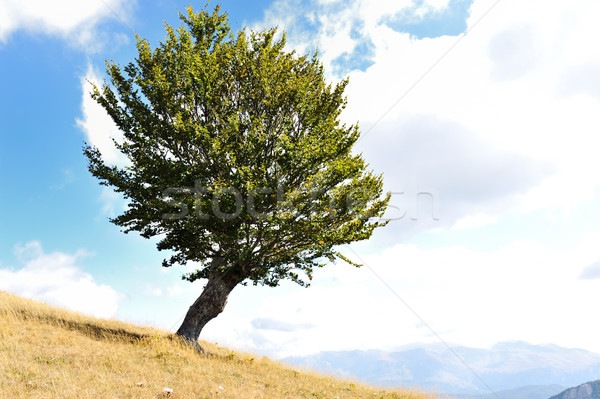 Une arbre herbe terres ciel nature Photo stock © zurijeta