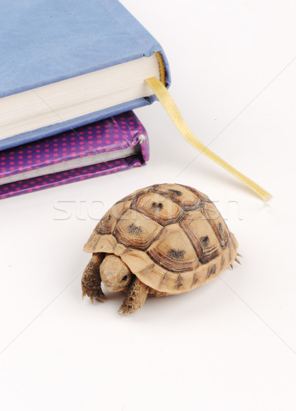 Slow turtle walking on table with book behind Stock photo © zurijeta
