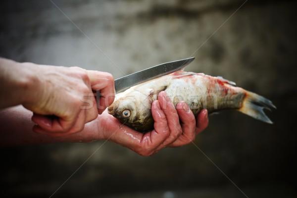 Préparation marines poissons femme mains main Photo stock © zurijeta