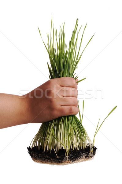 Uproot grass Stock photo © zurijeta