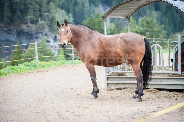 Paard oog haren donkere hoofd Stockfoto © zurijeta