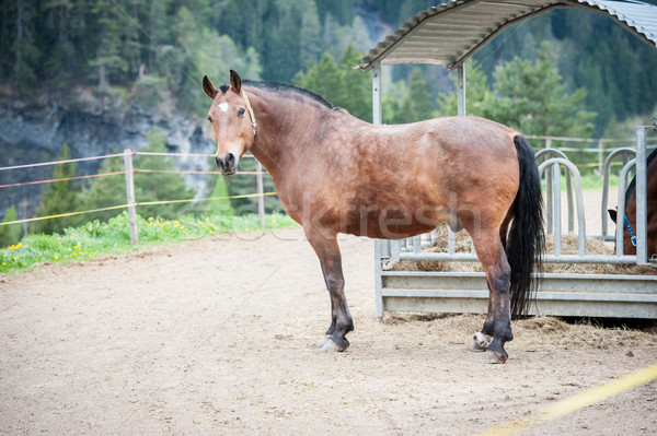 Cavalo olho cabelo escuro cabeça Foto stock © zurijeta