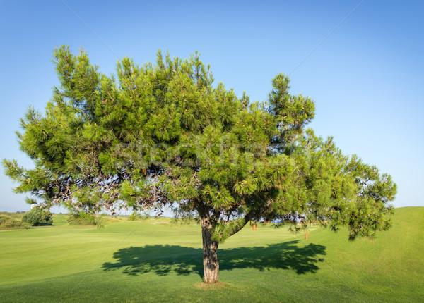 дерево красивой травой поле небе весны трава Сток-фото © zurijeta