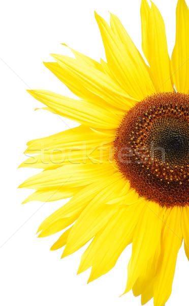 Stockfoto: Mooie · gele · bloem · kleurrijk · zonnebloem · natuur · zomer