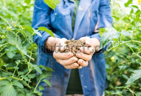 Senior woman holding young spring plant in hands for ecology and Stock photo © zurijeta