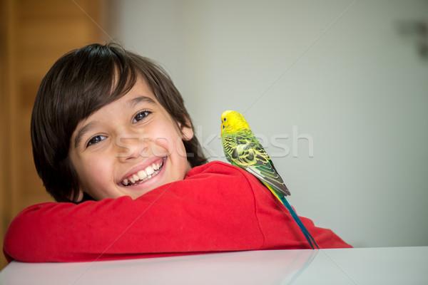 Dziecko gry domowych papuga dziecko niebieski Zdjęcia stock © zurijeta