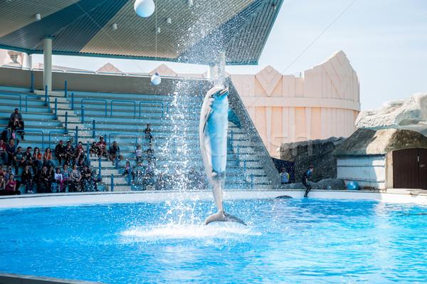 Delfinek játszik víz kék ugrás jókedv Stock fotó © zurijeta