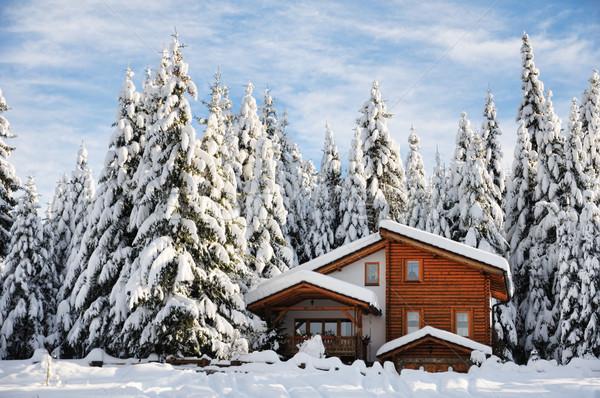 Winter beautiful scene Stock photo © zurijeta