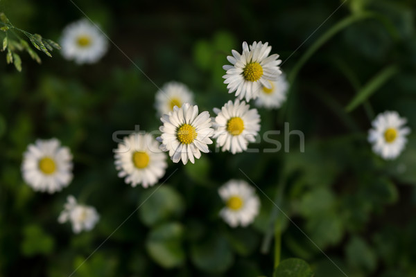 Foto stock: Prado · flor · abstrato · natureza · projeto · folha