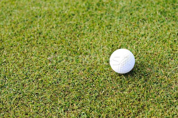 Piłeczki do golfa pole trawy trawy sportu zielone piłka Zdjęcia stock © zurijeta