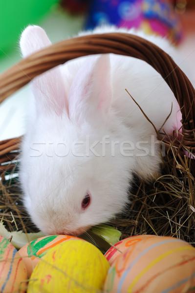 ストックフォト: 白 · 美しい · ウサギ · イースターバニー · 卵 · バスケット