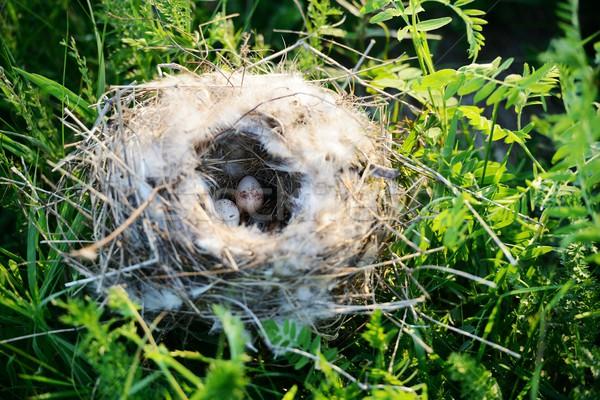 Bird nest with eggs Stock photo © zurijeta