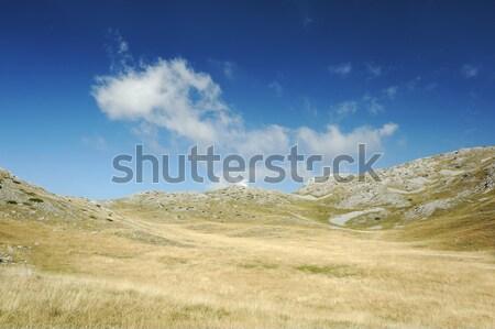 Yellow grass on the top of the mountain, background landskape Stock photo © zurijeta