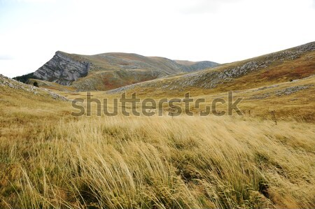 Grassland on mountains in autumn Stock photo © zurijeta