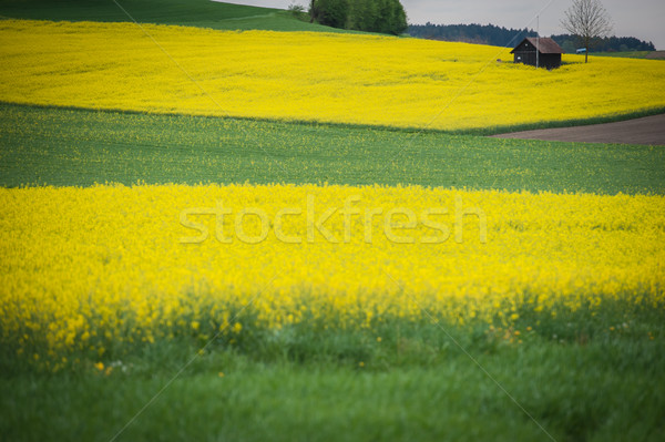 Piękna pola mały domek domu drzewo Zdjęcia stock © zurijeta