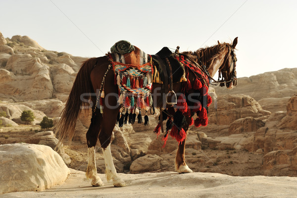 Arabian horse in Petra with traditional clothes, Jordan Stock photo © zurijeta