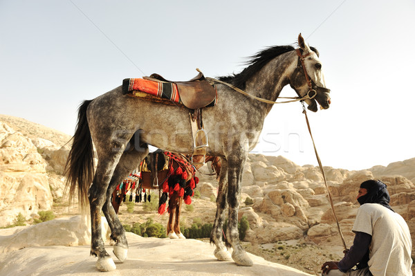 Man and horses in nature Stock photo © zurijeta
