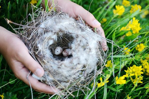鳥の巣 卵 少女 春 森林 葉 ストックフォト © zurijeta