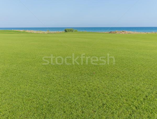 идеальный трава луговой гольф области спорт Сток-фото © zurijeta