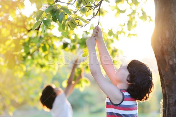 Happy kid outdoors in nature having good time Stock photo © zurijeta