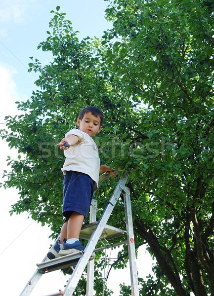 Child taking off the plum in vintage Stock photo © zurijeta