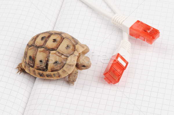 Turtle and slow connection Stock photo © zurijeta