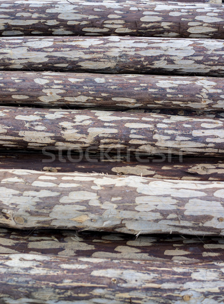Pile of wood logs ready for winter Stock photo © zurijeta