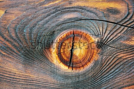 Wooden texture Stock photo © zurijeta