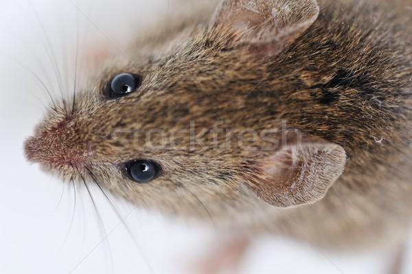 Fare yalıtılmış beyaz göz yüz tıp Stok fotoğraf © zurijeta