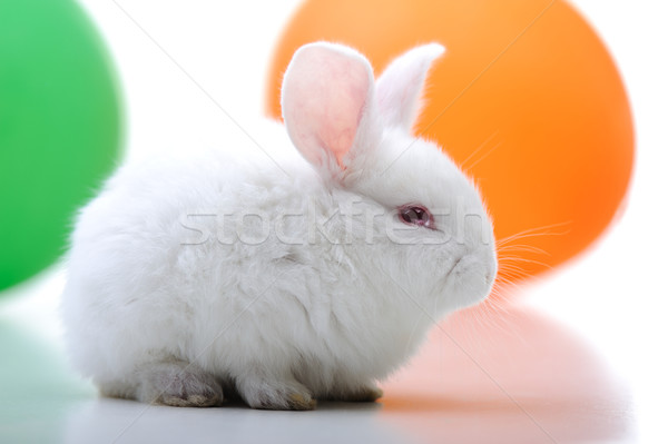 White beautiful rabbit, Easter bunny celebrating  Stock photo © zurijeta