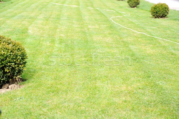 Zielone podwórko trawy człowiek ogród lata Zdjęcia stock © zurijeta