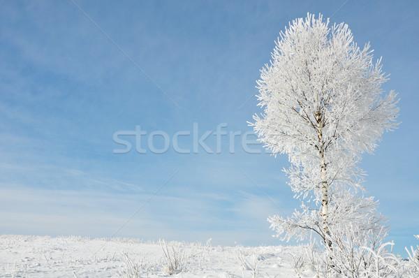 Snow Stock photo © zurijeta