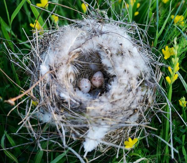 鳥の巣 卵 春 森林 葉 卵 ストックフォト © zurijeta