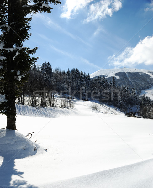 Tree in snow, winter sesone Stock photo © zurijeta