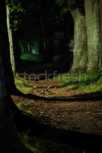 Adorable alley with threes and lights Stock photo © zurijeta