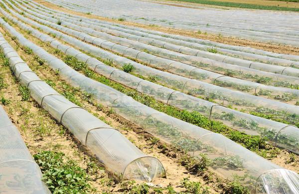 Foto d'archivio: Campo · acqua · panorama · vetro · giardino · industria