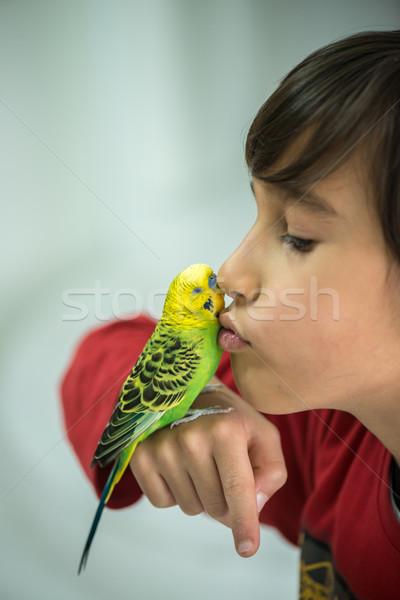 Dziecko gry domowych papuga ptaków niebieski Zdjęcia stock © zurijeta