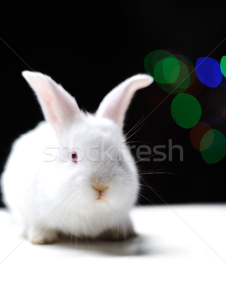 White beautiful rabbit, Easter bunny Stock photo © zurijeta