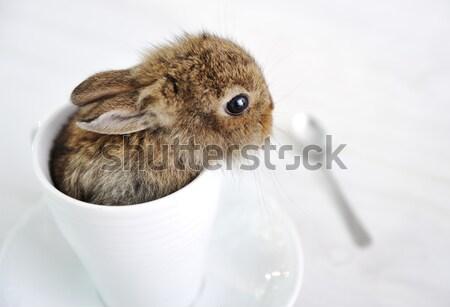 Rabbit cute baby in cup Stock photo © zurijeta
