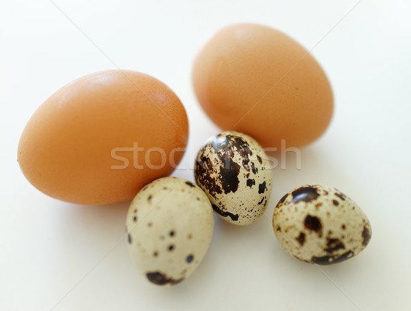 Chicken eggs and quail eggs in white background Stock photo © zurijeta