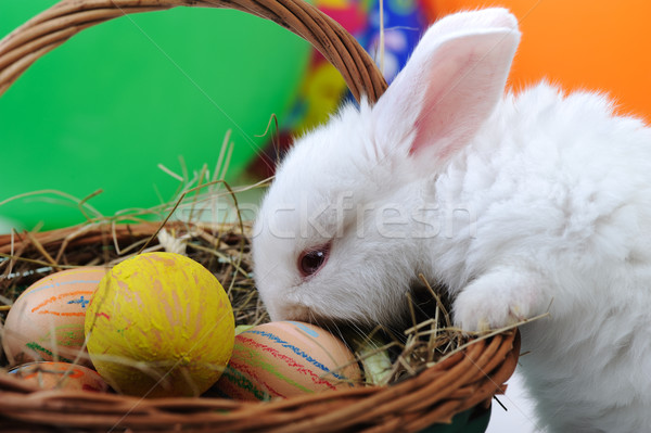 White beautiful rabbit, Easter bunny with eggs in basket  Stock photo © zurijeta