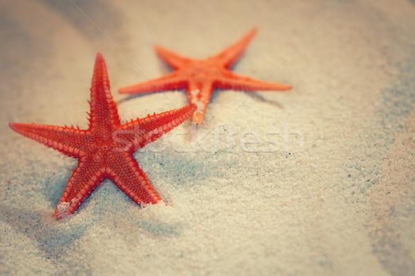 Zomer zee zand zeester strand water Stockfoto © zven0
