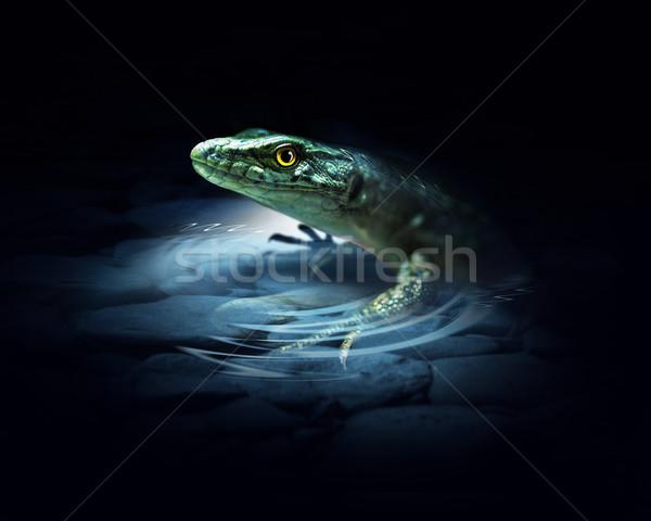 Jaszczurka ciemne charakter zielone skóry tropikalnych Zdjęcia stock © zven0