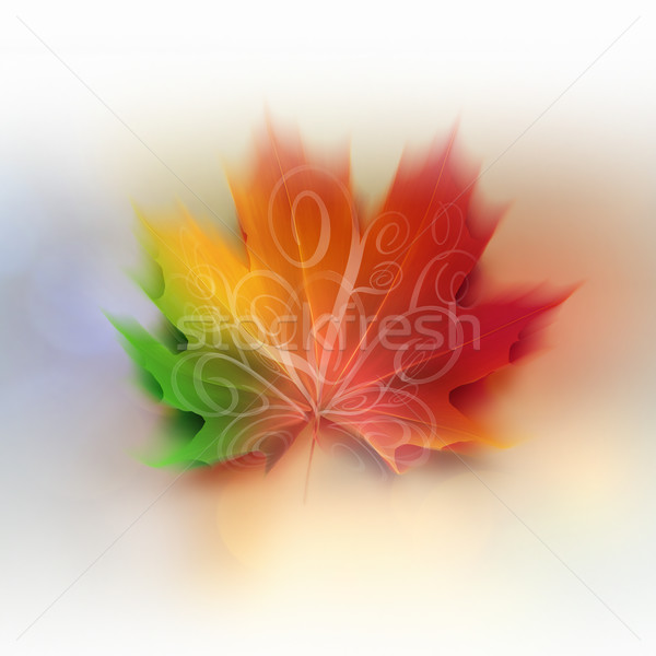 colorful maple leaf Stock photo © zven0