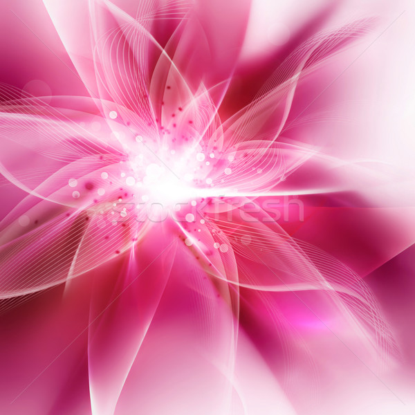 Flor-de-rosa luz flor primavera abstrato Foto stock © zven0