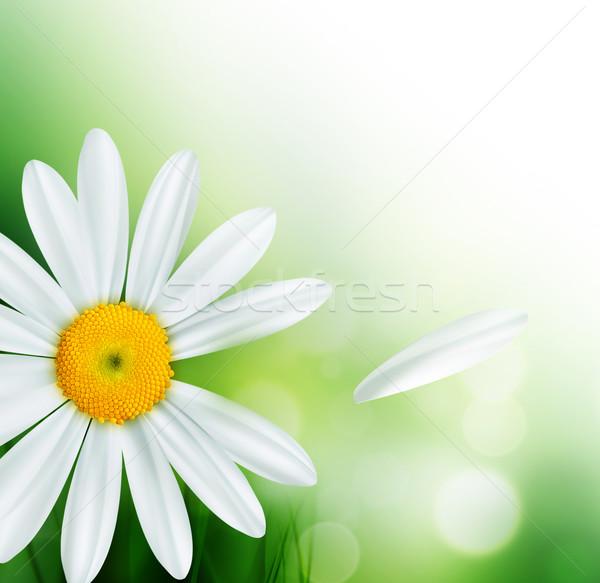 Natureza abstrato grama folha beleza campo Foto stock © zven0