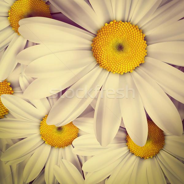ромашка лет ретро-стиле весны свет Сток-фото © zven0