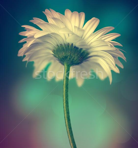 Witte bloem donkere bloemen voorjaar groene plant Stockfoto © zven0