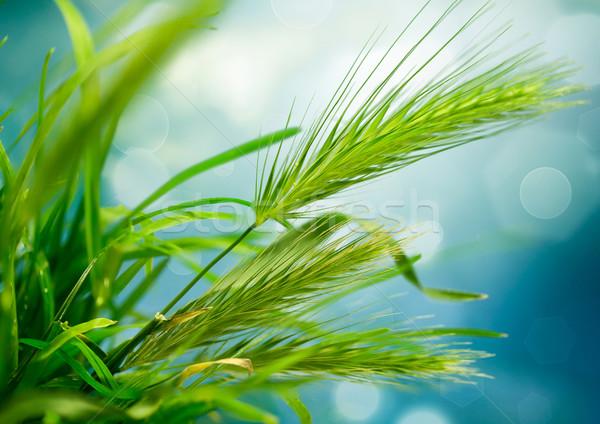 аннотация природы искусства дизайна трава лист Сток-фото © zven0